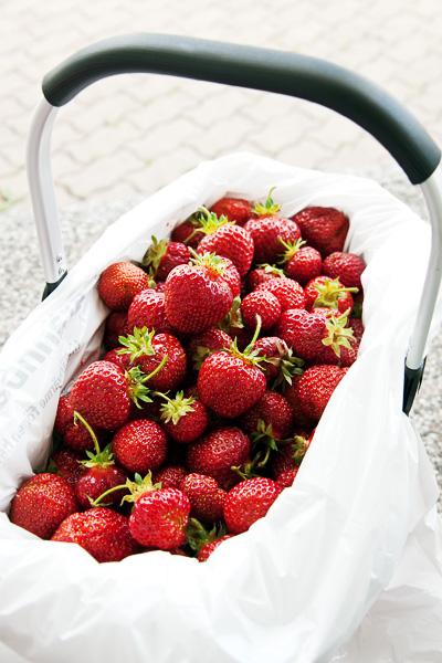 Korg med nyplockade jordgubbar