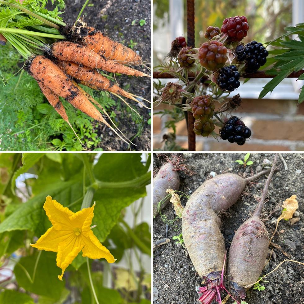 Trädgårdsdrömmar och skördetid